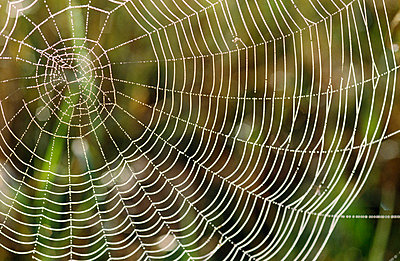 Spider web close-up - p5750505 by Staffan Widstrand