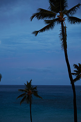 Palm Trees and ocean in Big Island, Hawaii, - p579m2015585 by Yabo