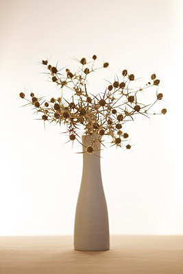 Thistle in a vase - p5862008 by Kniel Synnatzschke