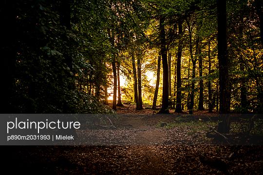 Abend im Wald - p890m2031993 von Mielek
