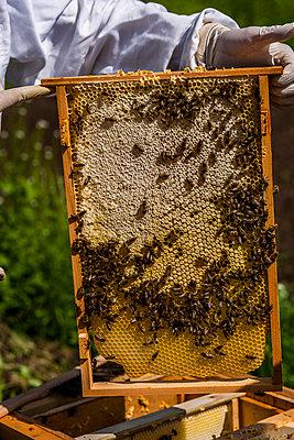 Beekeeper - p867m1051277 by Thomas Degen
