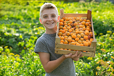 Smiling boy holding crate of apricots - p1427m2085268 by Mykhailo Lukashuk