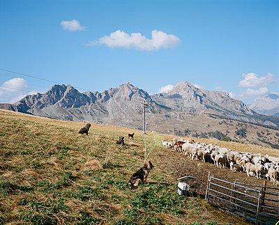 Enclosed herd #2 - p1349m1222808 by Nicolas Blandin