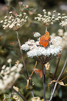 Insects looking for food - p1609m2253819 by Katrin Wolfmeier