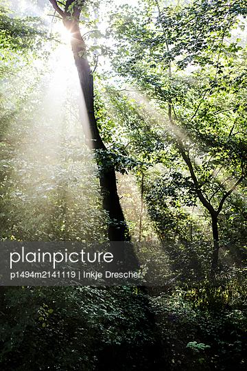 Sonnenlicht - p1494m2141119 von Inkje Drescher