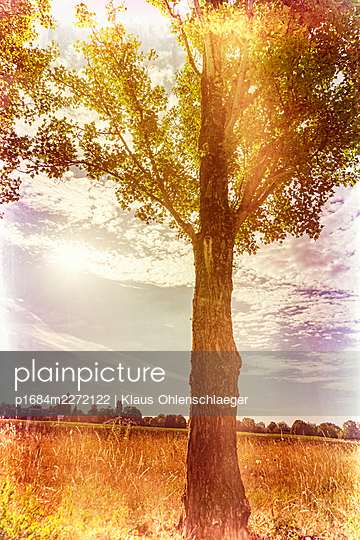 Tree on a field - p1684m2272122 by Klaus Ohlenschlaeger