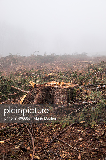 Deforestation - p445m1496606 by Marie Docher