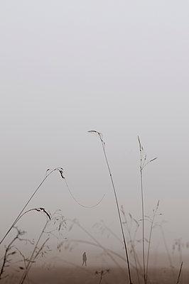 Nebelstimmung - p470m1502263 von Ingrid Michel