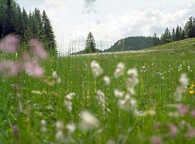 Tirol;  Kaiserwinkl - p6060395 von Iris Friedrich