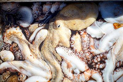 Tintenfisch Nahaufnahme - p921m1355391 von Boris Leist