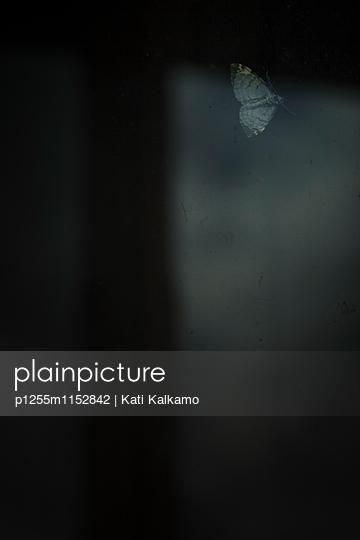 Motte am Fensterglas - p1255m1152842 von Kati Kalkamo