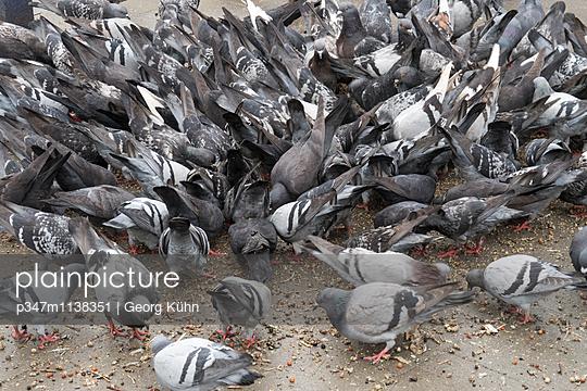 Tauben füttern - p347m1138351 von Georg Kühn
