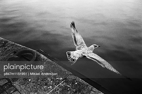 p847m1151951 von Mikael Andersson