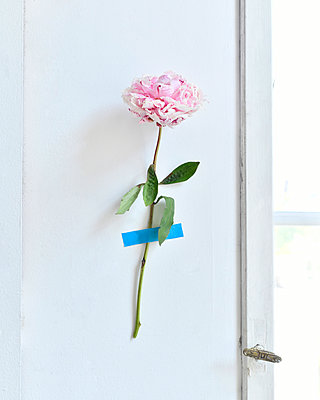 Flower fixed with tape on wall - p1190m2288998 by Sarah Eick