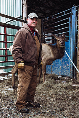 Caucasian farmer working with elk in stable - p555m1408475 by Emily Suzanne McDonald