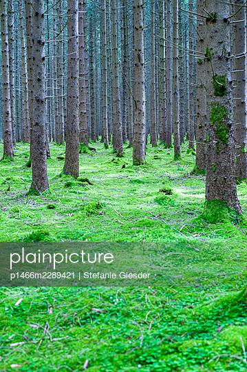 Mossy forest ground - p1466m2289421 by Stefanie Giesder