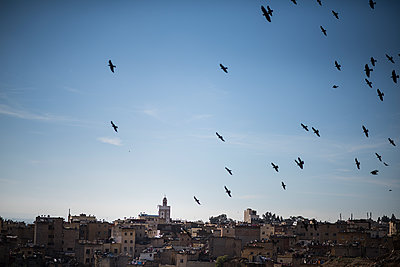 Birds in the sky of Fès - p1007m2092424 by Tilby Vattard