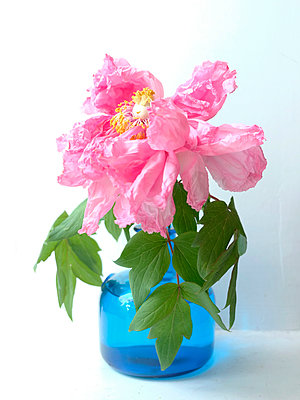 Flower in vase - p1521m2081613 by Charlotte Zobel