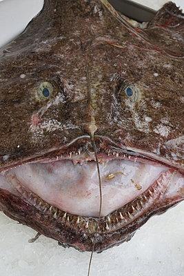 Monkfish - p1610m2293101 by myriam tirler