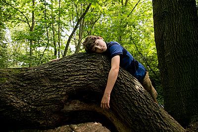 Junge liegt auf einem Ast - p1212m1152983 von harry + lidy