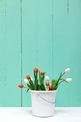 Tulips - p237m1042128 by Thordis Rüggeberg