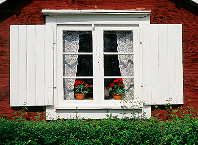 house window with curtains and flowers - p8474402 by Bengt Olof Olsson