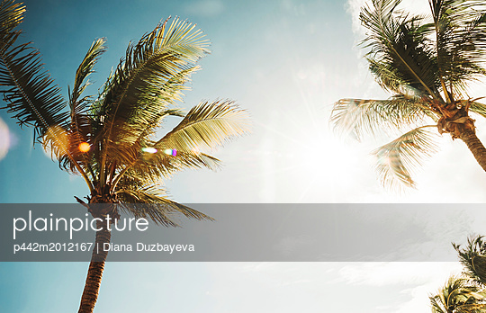 p442m2012167 von Diana Duzbayeva