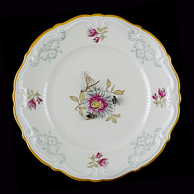 Several insects on plate with floral pattern - p1366m2260563 by anne schubert