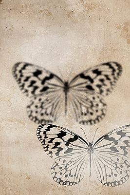 Butterfly  - p450m1052014 by Hanka Steidle