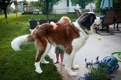 Small boy hugging large saint bernard dog in backyard at home - p1166m2146811 by Cavan Images