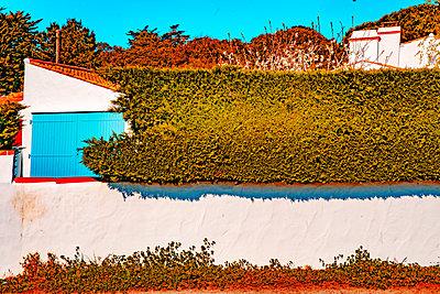 Hedge as a screen, summer cottage, Île de Noirmoutier - p1484m2283910 by Céline Nieszawer