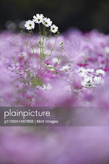 p1100m1497858 von Mint Images