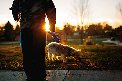Low section of boy with Yorkshire Terrier in park during sunset - p1166m1403021 by Cavan Images