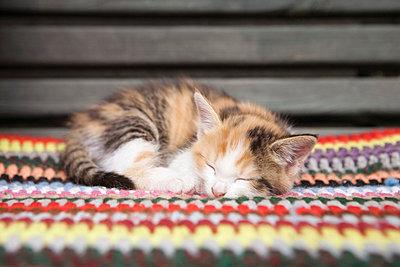 Geschecktes Katzenkind - p4350069 von Stefanie Grewel