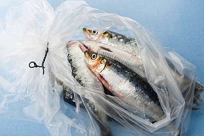 Fresh raw sardines in plastic bag - p62321369f by Laurence Mouton