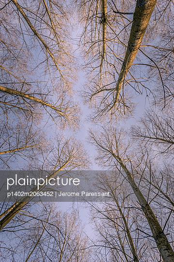 Hohe Bäume - p1402m2063452 von Jerome Paressant