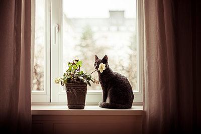 Katze am Fenster - p1398m1441652 von Tabitha Genoveva Harter