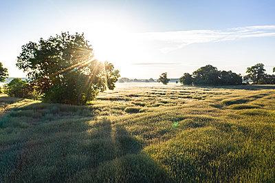 Germany, Brandenburg, Drone view of vast poppy field at springtime sunrise - p300m2202445 by Anke Scheibe