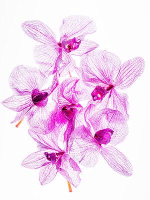Orchideenblüten - p401m2193023 von Frank Baquet
