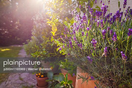 p300m1165969 von Werner Dieterich