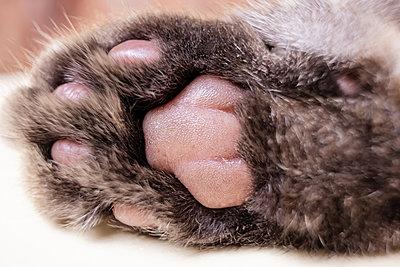 Cat's gray foot pad macro - p1166m2171718 by Cavan Images
