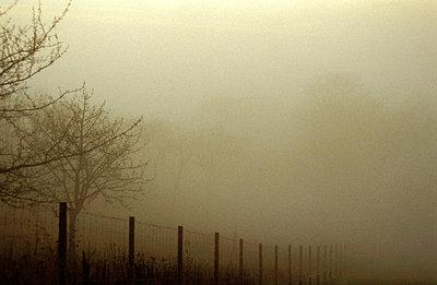 Fog  - p1370003 by Kirsten Delrieux