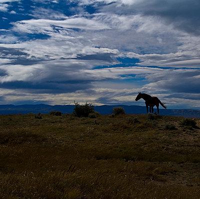 Landschaft mit Pferd in Patagonien - p9791175 von Scheifarth