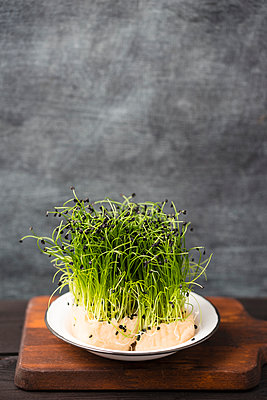 Rock chives, chive sort from east asia - p300m1156813 by Mandy Reschke