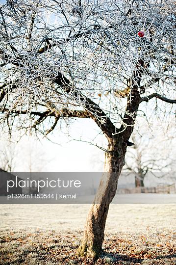 Baum der Erkenntnis - p1326m1159544 von kemai