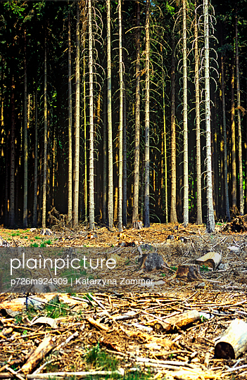 Forst - p726m924909 von Katarzyna Zommer