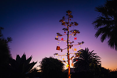 Agave blossom tree decorated with Christmas ornaments, Costa Teguise, Lanzarote, Spain - p301m2075846 by Sven Hagolani