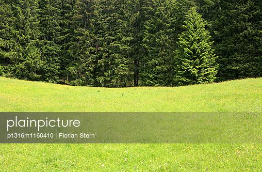 Grüne Weide am Waldrand, Arzmoos, Sudelfeld, Bayern, Deutschland - p1316m1160410 von Florian Stern