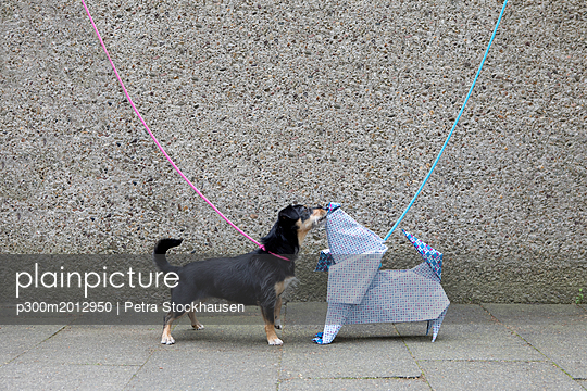Blue origami dog and dog sniffing - p300m2012950 von Petra Stockhausen