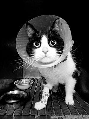 Verletzte Katze - p1189m1017054 von Adnan Arnaout